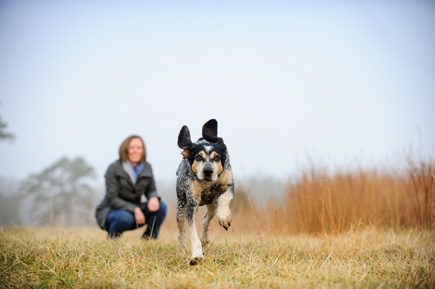 Empty Nest – Now What? Discover a new career working with dogs.