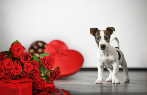 Find a new 'leash' on love with a new career this Valentine's Day